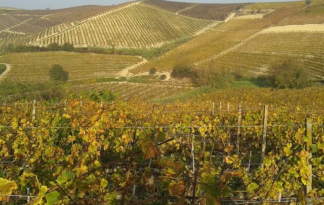vineyards-667596_640